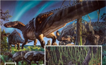 70 million years ago dinosaurs and — a tiny marsupial — called the Arctic home