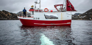 Why Norwegians are worried about a mysterious beluga whale that appeared off Norway's Arctic coast
