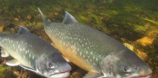 Arctic freshwaters face big changes, possible species loss, says report