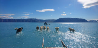 A Greenland dog-sled expedition for science faced flooded sea ice following unusually warm temperatures