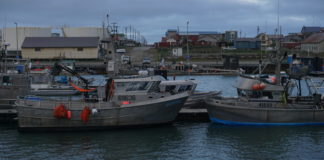 In Alaska's northern Bering Sea, a commercial pink salmon fishery emerges