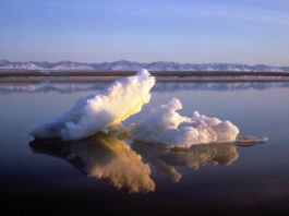 US regulators choose expansive plan for Arctic Refuge oil leasing, offering entire coast for auction