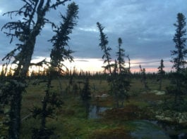 Warmer, shorter winters have turned permafrost regions from carbon sink to source