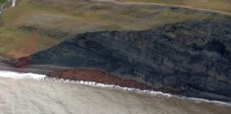 For the first time, scientists have found a dangerous toxin from algae in the Bering Strait and Chukchi Sea