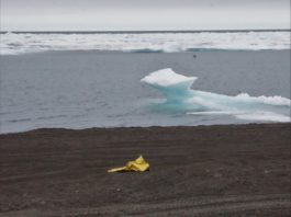 Why engaging the private sector is critical to cleaning up Arctic Ocean plastic pollution