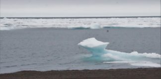 A rising tide of plastic pollution in the Arctic is spurring international action