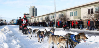 Iditarod mushers can expect deep snow this year