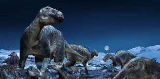 Arctic fossils suggest dinosaurs migrated across the Bering Land Bridge