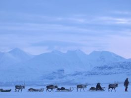 Sweden moves to update Sámi reindeer laws in the wake of a landmark land-rights decision