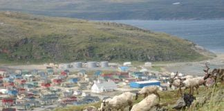 Nunavik pushes for its right to manage and harvest the region's caribou