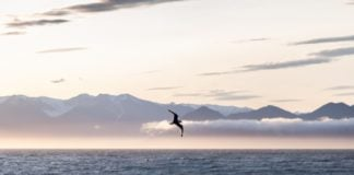 Ocean plastics continue to impact some Arctic seabirds more than others, a new study finds