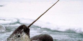 Canada allows Greenland to weigh in on Nunavut mine expansion, under UN convention