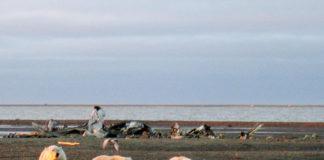 Trump administration approves oil leasing in Alaska wildlife refuge