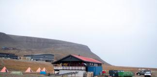 A polar bear has killed a Dutch man camping in Svalbard