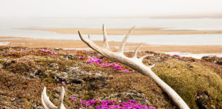 Dual lawsuits seek to prevent oil leasing in Alaska's Arctic Refuge