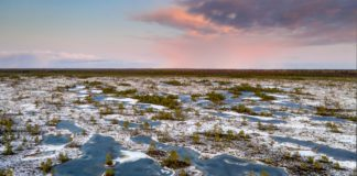 We mapped the world's frozen peatlands. What we found was very worrying