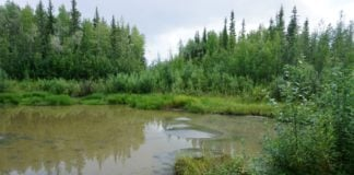 Heavy summer rains speed permafrost thaw, a new study finds