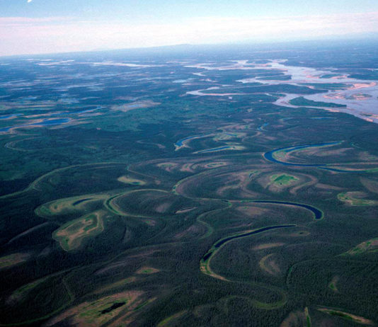 Mercury released by permafrost thaw puts Yukon River fish at risk, a new study finds