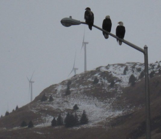 Alaska's experience shows benefits — and challenges — of wind energy in the Arctic