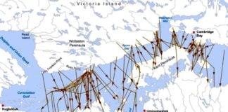 Nunavut government limits hunting of Dolphin and Union caribou