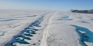 As high Arctic ecosystems collapse, scientists call for more protection