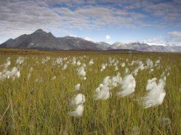 Biden administration suspends oil leases in Alaska's Arctic refuge