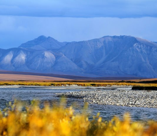 Trump administration plans to sell Arctic refuge oil leases in early January