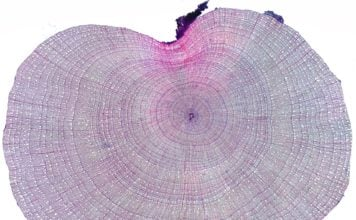 How tiny growth rings revealed the secret link between sea ice loss and tundra 'greening' and 'browning'