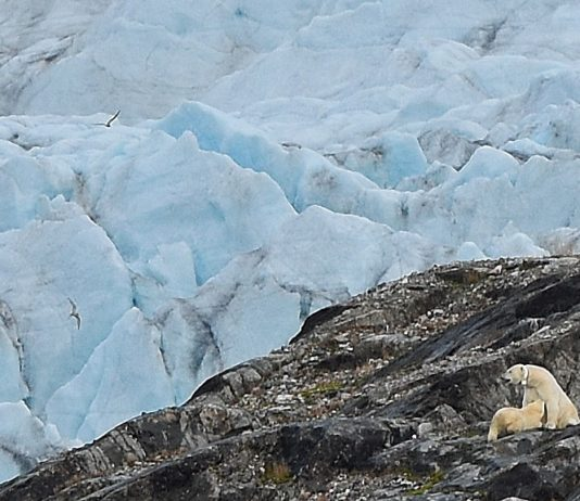 Disney plans to shoot a climate change drama in Svalbard