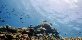 Noise pollution is harming sea life, needs to be prioritized, scientists say