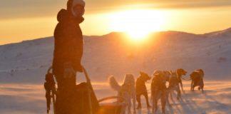 Finnmarksløpet sled dog race cancelled over COVID-19 fears