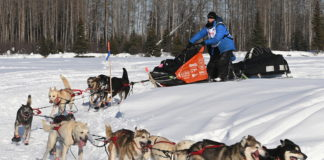 Socially distanced Iditarod sled dog teams set off from secluded Alaska river site