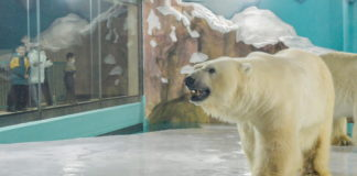 China's 'polar bear hotel' opens to full bookings, criticism