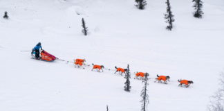 Dallas Seavey completes shortened route to win record-tying fifth Iditarod