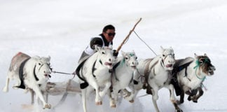Sled races are a highlight of Salekhard's Reindeer Breeder Day celebrations