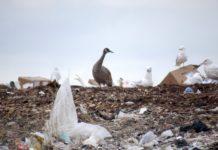 Waste management in Inuit Nunangat needs major fixes, says Oceans North report