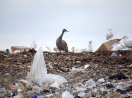 Waste management in Inuit Nunangat needs major fixes, says Oceans North report