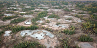 How scientists are restoring northern peatlands to help keep carbon in the ground