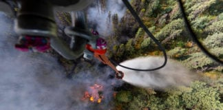As extreme fires transform Alaska's boreal forest, deciduous trees put a brake on carbon loss