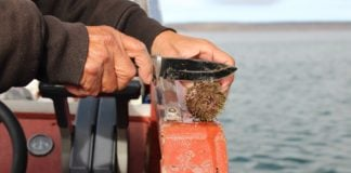 Nunavut communities are exploring how local fisheries could boost economic growth