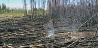 Overwintering 'zombie' fires may become more common as climate changes
