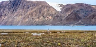 Arctic tundra will see an earlier green-up and longer growing seasons, study says