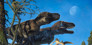 Fossil find adds to evidence of dinosaurs living in Arctic year-round
