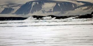 Polar bears face extinction in Svalbard and Arctic Russia