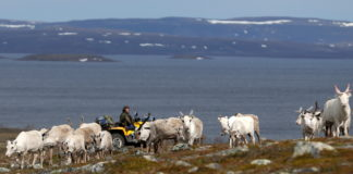 Two Norway wind farms lose their licenses in a landmark Indigenous rights ruling