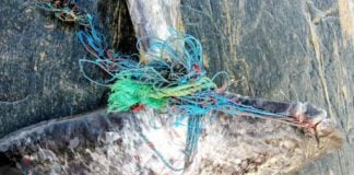 Greenland looks for ways to bust ghost fishing gear